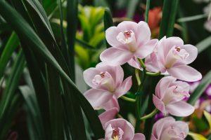 Flower84s0I9A5260_TP_V